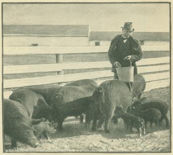 Booker T. Washington feeding pigs