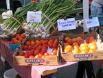 Field grown garlic and tomatoes for sale